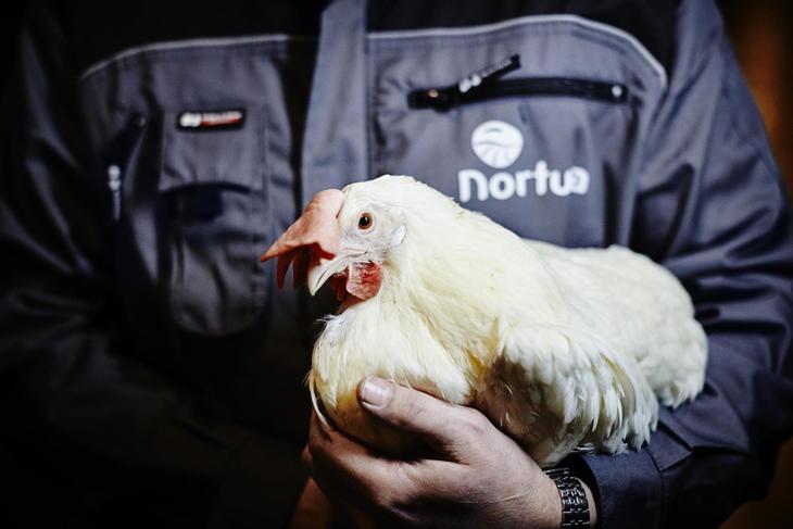 Bonde med høne
